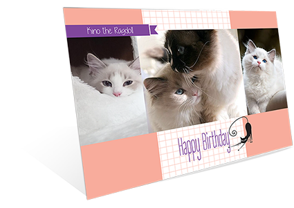 Cat - Happy Birthday!